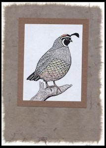 The Crested Quail stamp is stamped, colored with pencils and layered on homemade paper.